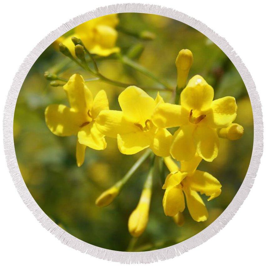 Carolina Round Beach Towel featuring the photograph Fragrant Yellow Flowers Of Carolina Jasmine by Taiche Acrylic Art
