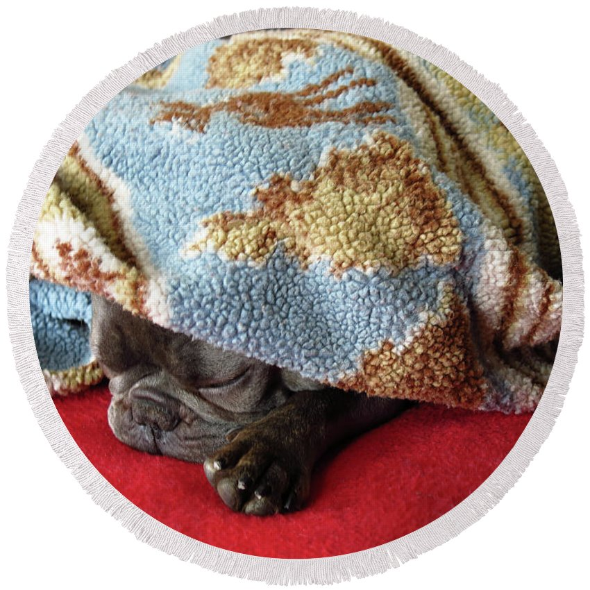 Adorable Round Beach Towel featuring the photograph French Bulldog Naps Under A Blanket-1 by Tana Kosiyabong