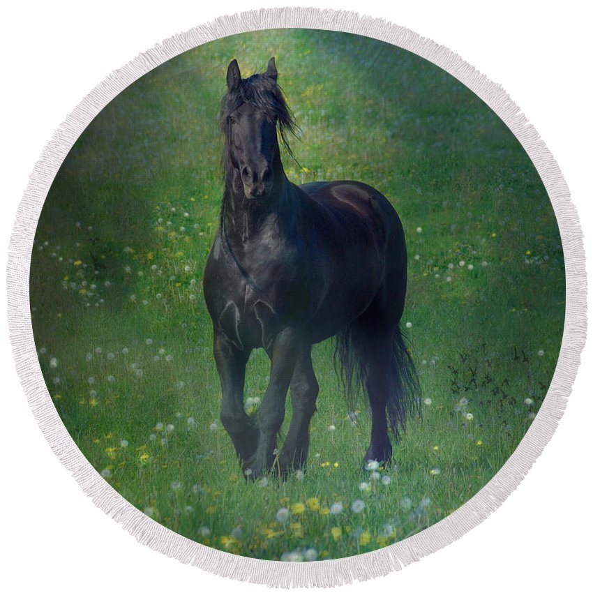 Horses Canvas Prints Round Beach Towel featuring the photograph Friesian Mist by Fran J Scott