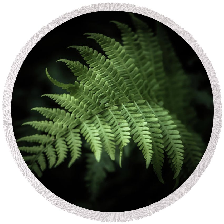 Fern Round Beach Towel featuring the photograph From The Shadows by Patricia Mast