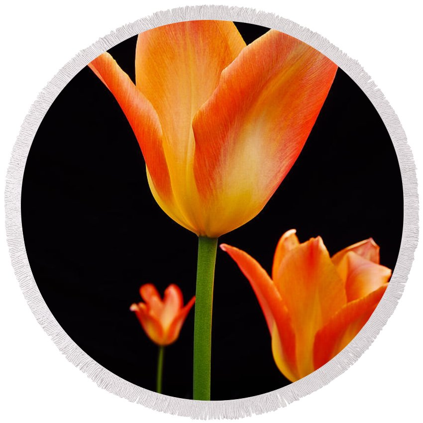 Tulip Round Beach Towel featuring the photograph Front Runner by Michael Peychich
