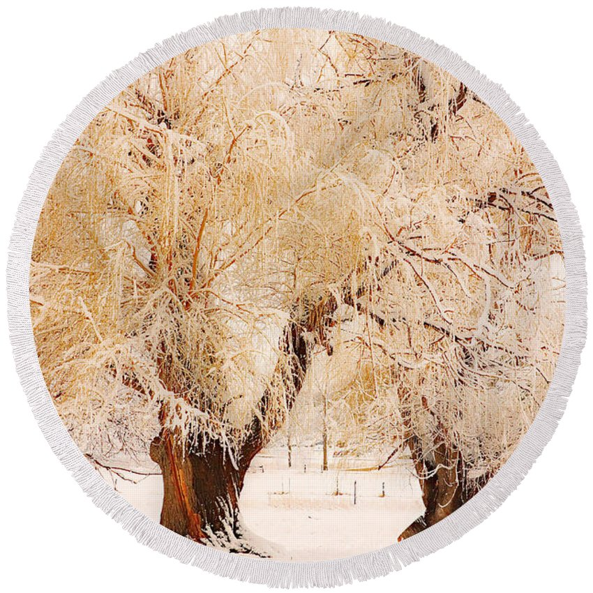 Trees Round Beach Towel featuring the photograph Frosted Golden Trees by James BO Insogna