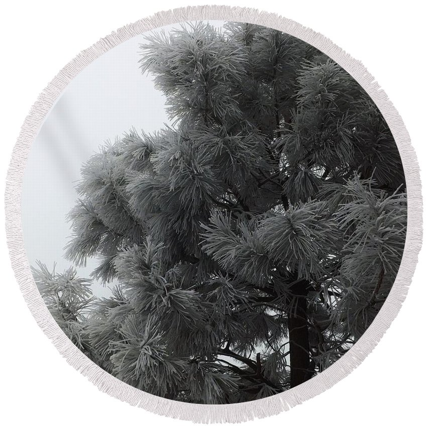 Tree Round Beach Towel featuring the photograph Frosted Pine by Juanmanuel Ortega
