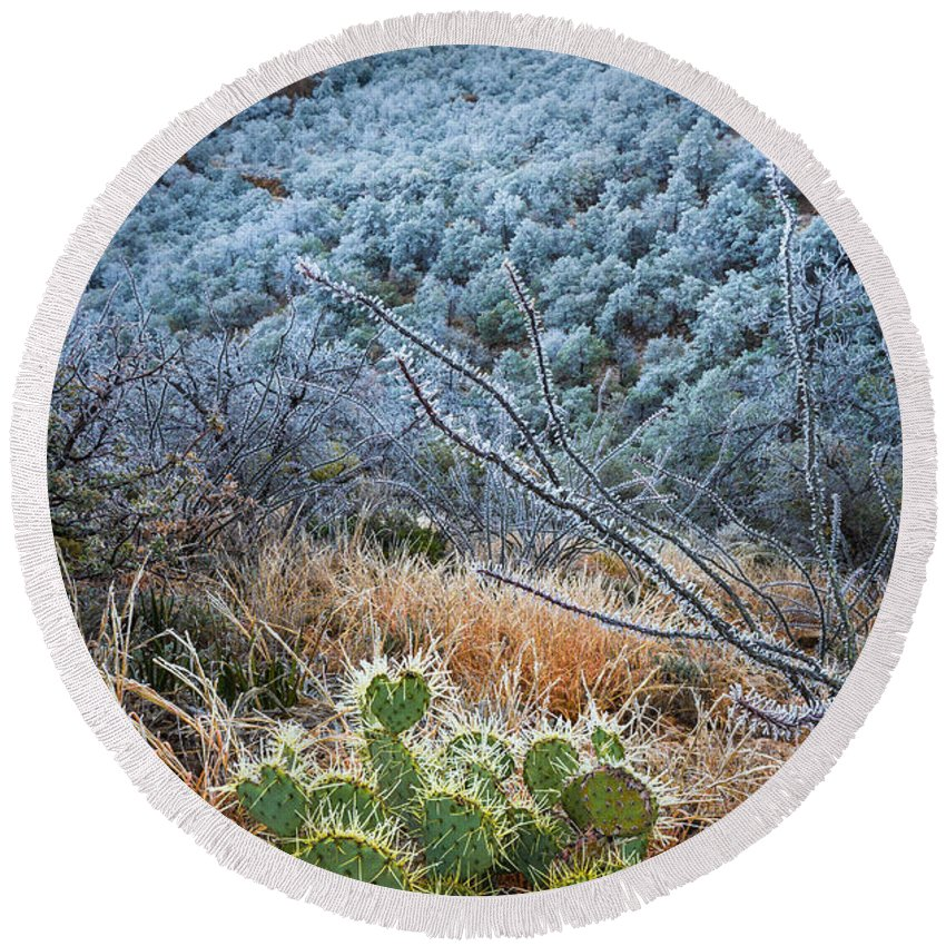 America Round Beach Towel featuring the photograph Frosty Prickly Pear by Inge Johnsson