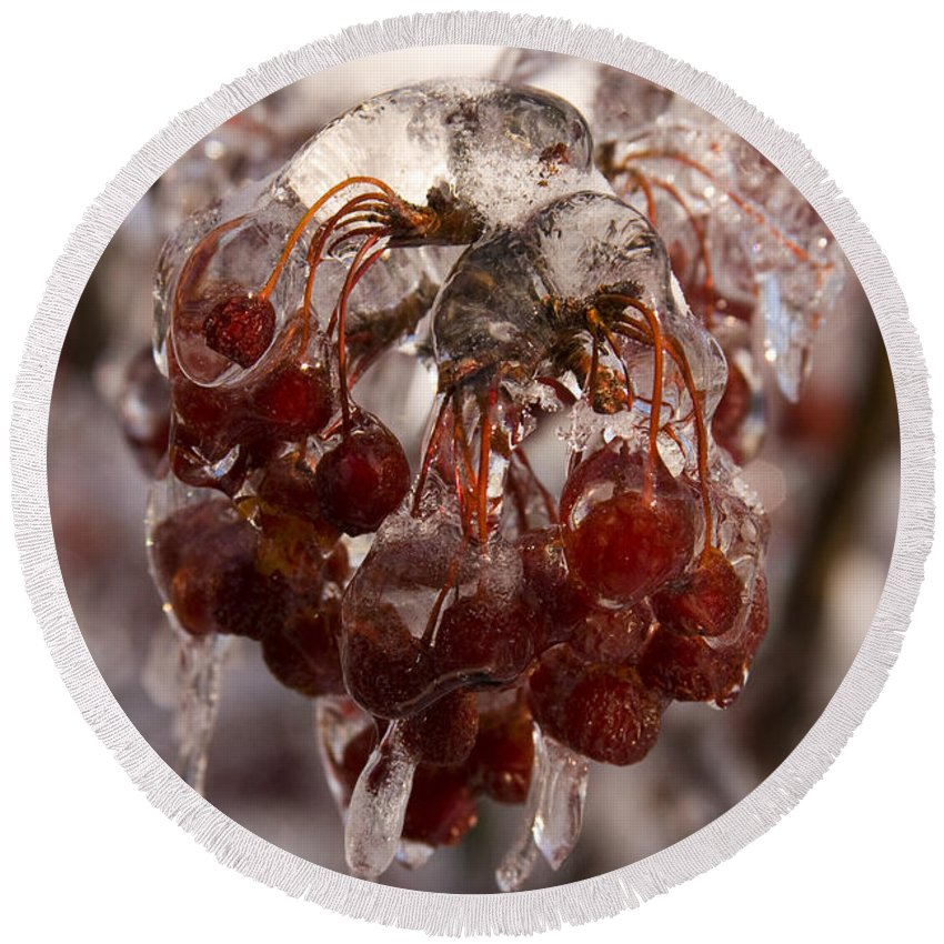 Berry Berries Red Frozen Ice Icy Snow White Spark Tree Winter Storm Glare Sun Reflection Round Beach Towel featuring the photograph Frozen Berries by Andrei Shliakhau