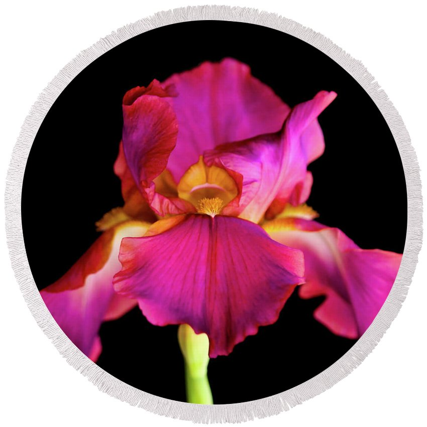 Background Round Beach Towel featuring the photograph Fuchsia Iris by Stephen Bloedow