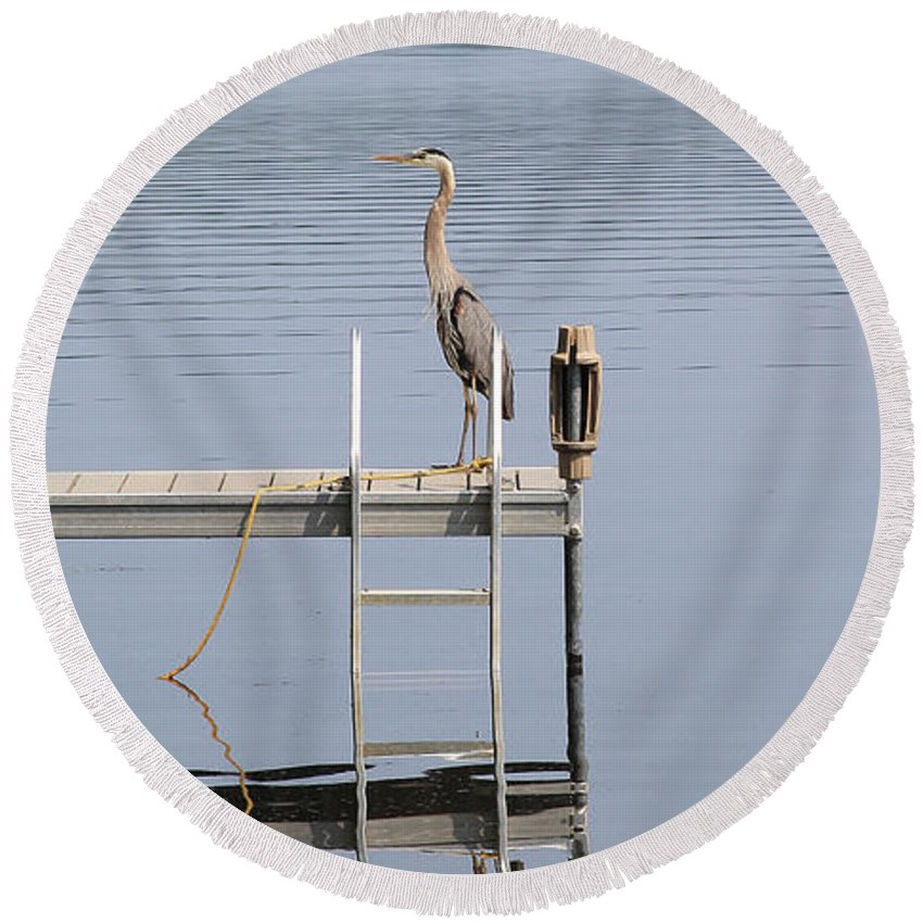 Heron Round Beach Towel featuring the photograph Full Alert by Laura Mace Rand