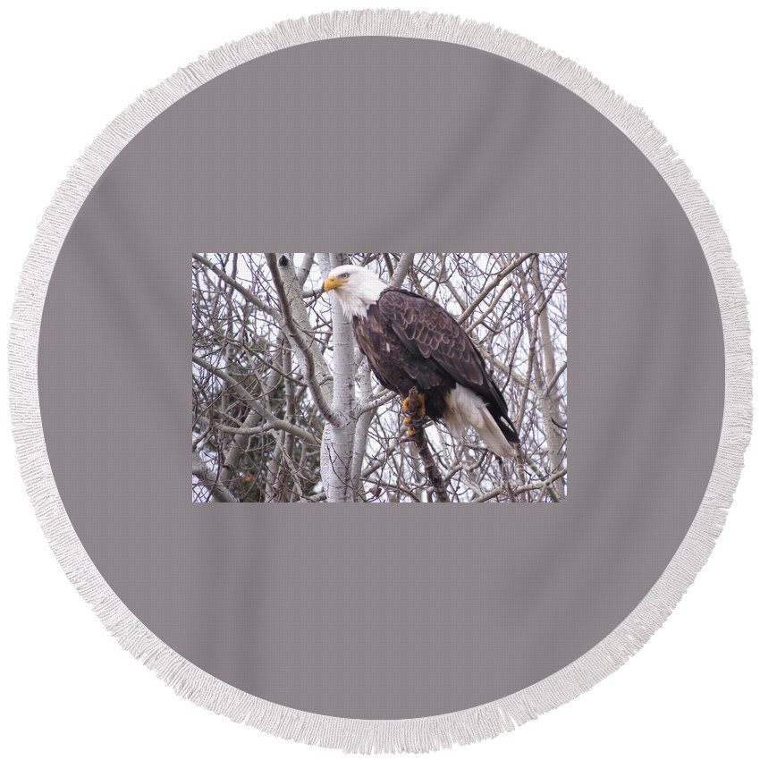 Photograph Round Beach Towel featuring the photograph Full Bald Eagle by Mary Mikawoz