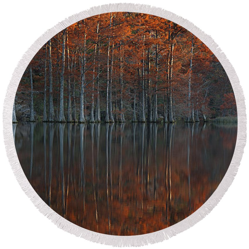Beavers Bend Round Beach Towel featuring the photograph Full Of Glory - Cypress Trees In Autumn by Mitch Spence