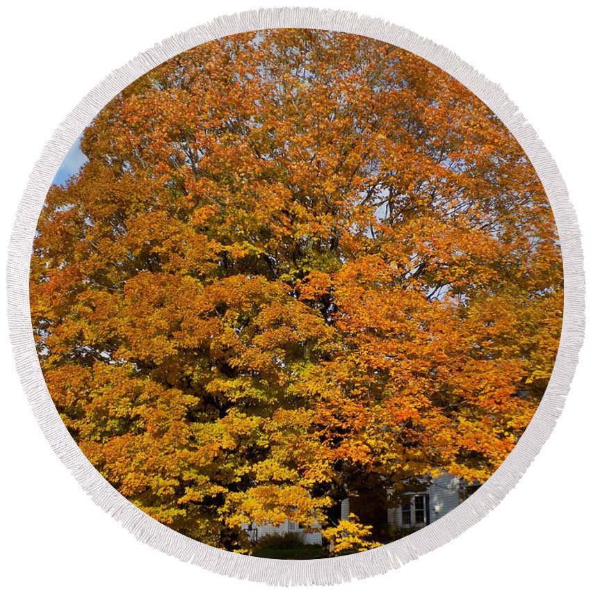 Maple Tree Round Beach Towel featuring the photograph Full On Orange by William Tasker