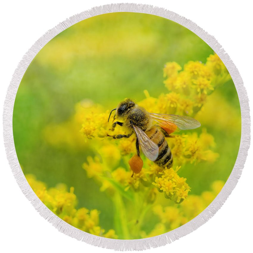 Honeybee Round Beach Towel featuring the photograph Fully Loaded by Susan Capuano