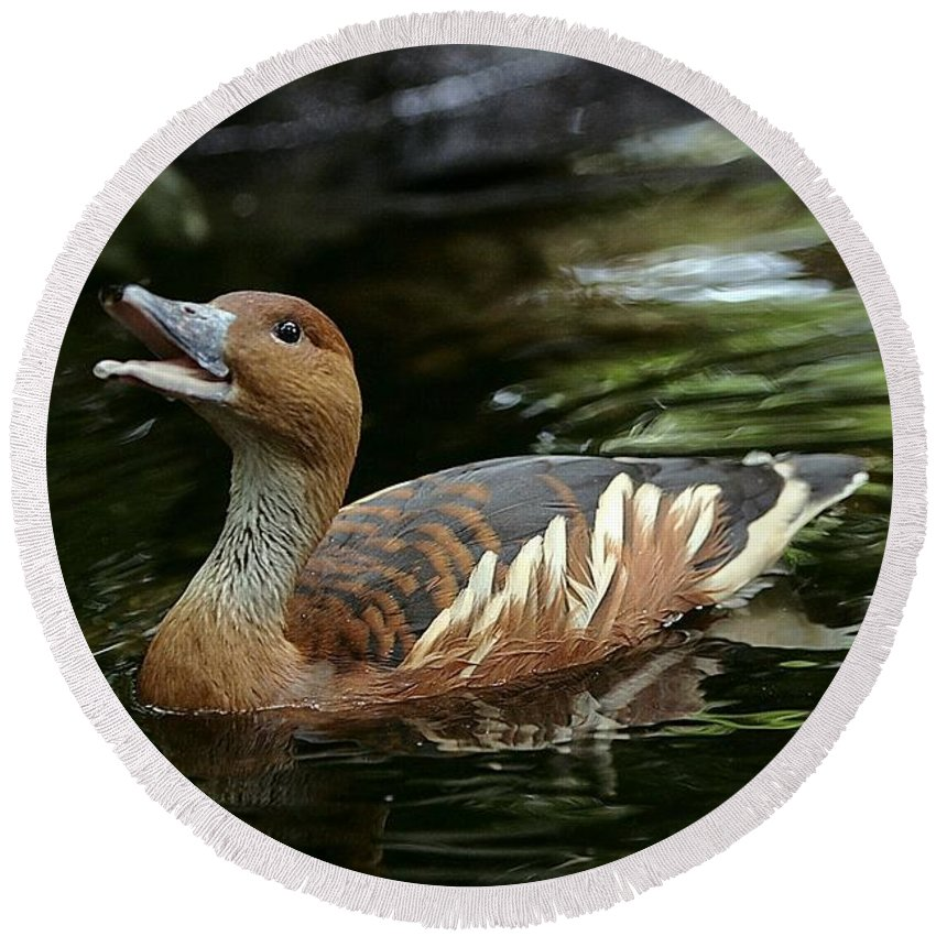 Duck Round Beach Towel featuring the photograph Fulvous Whistling Duck 2 by Randy Matthews
