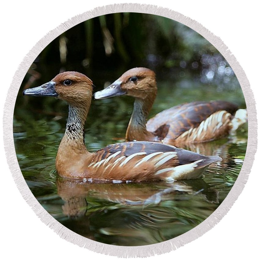 Duck Round Beach Towel featuring the photograph Fulvous Whistling Duck by Randy Matthews
