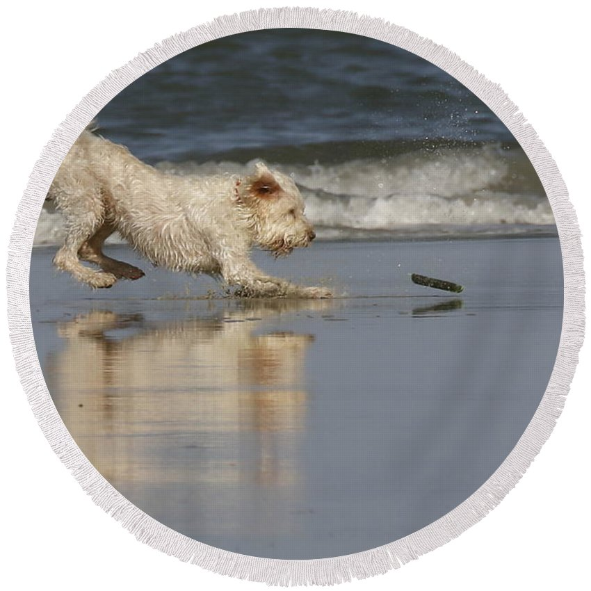Animals Round Beach Towel featuring the photograph Fun In The Surf by Myrna Bradshaw
