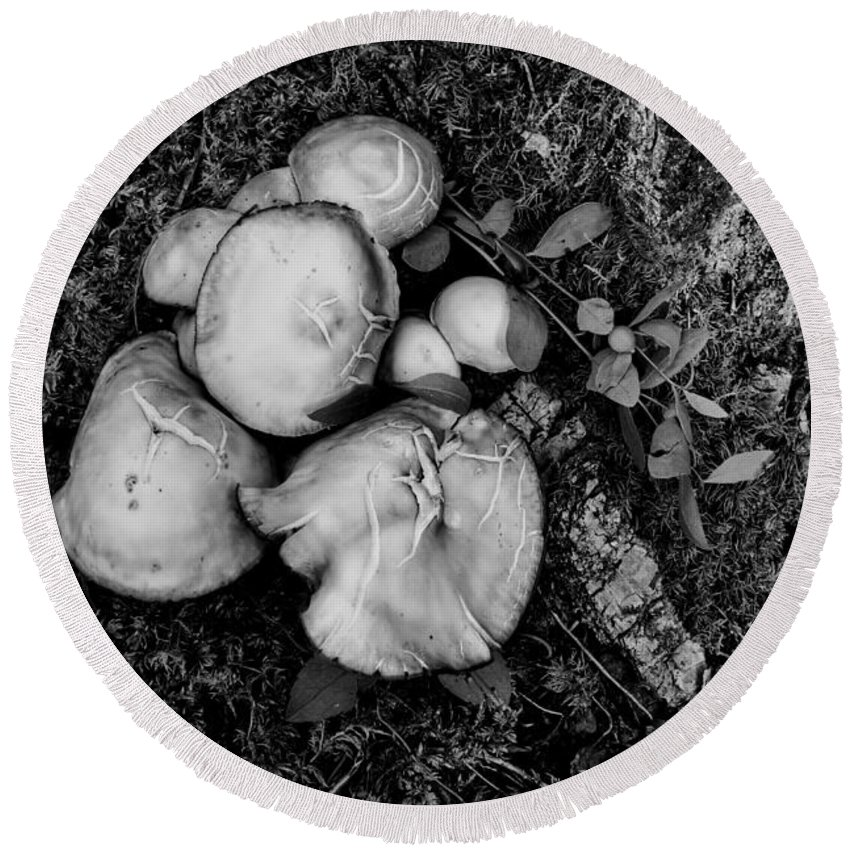 Fungi No 4 Bw Round Beach Towel featuring the photograph Fungi No 4 Bw by Phyllis Taylor