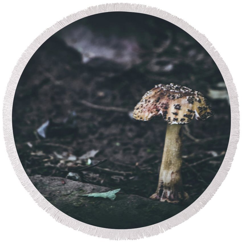 Mushroom Round Beach Towel featuring the photograph Fungus by Patricia Mast
