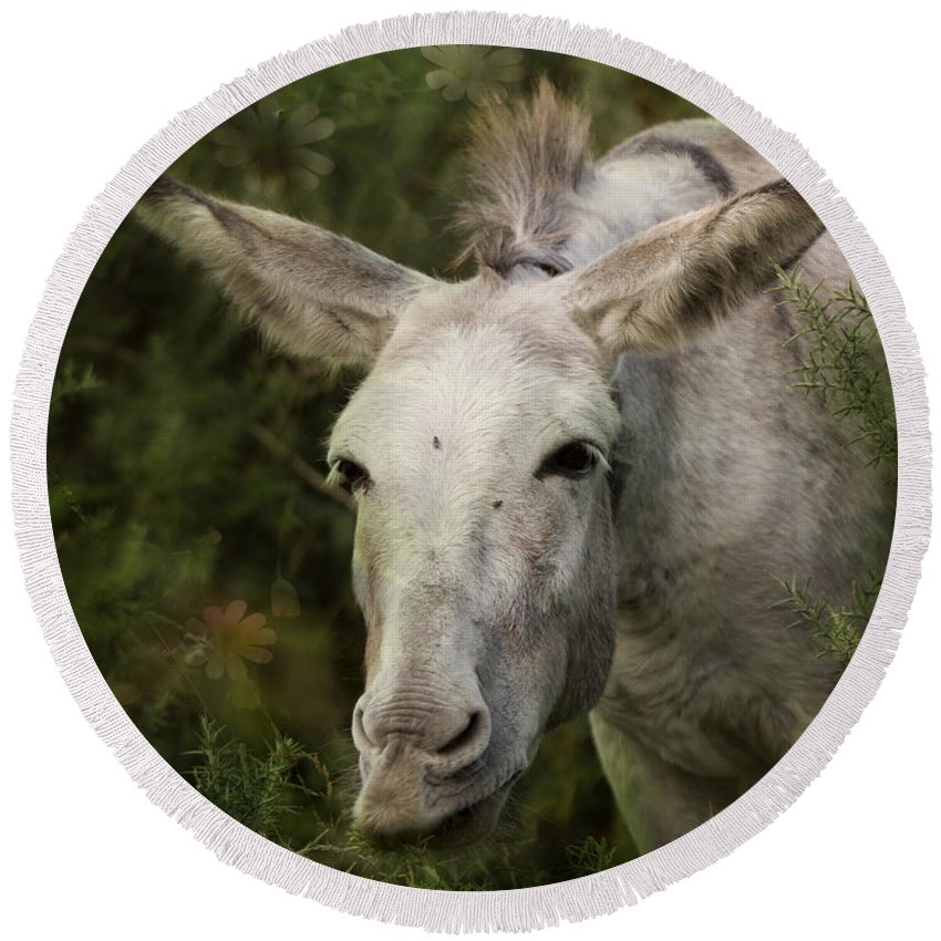 Donkey Round Beach Towel featuring the photograph Funky Donkey by Angel Ciesniarska