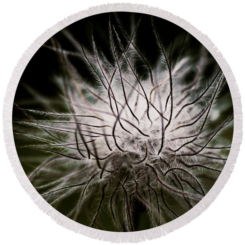 Botanical Round Beach Towel featuring the photograph Fuzzy Flower Seedhead by Venetta Archer