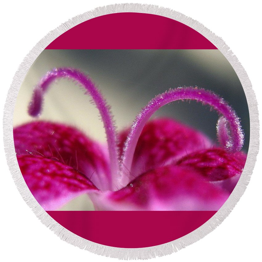 Dianthus Round Beach Towel featuring the photograph Fuzzzzz by Marla McFall