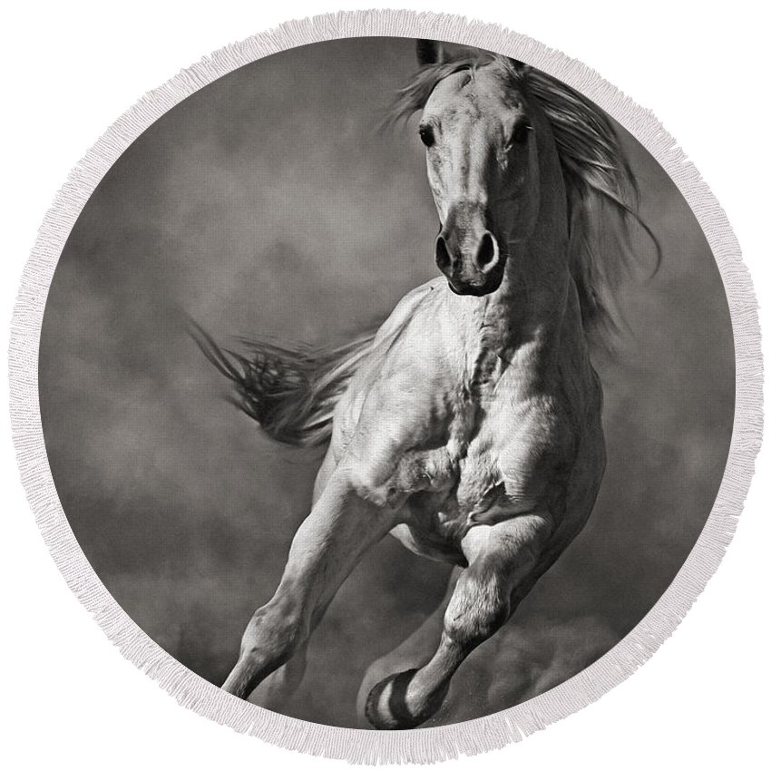 Horse Round Beach Towel featuring the photograph Galloping White Horse In Dust by Dimitar Hristov