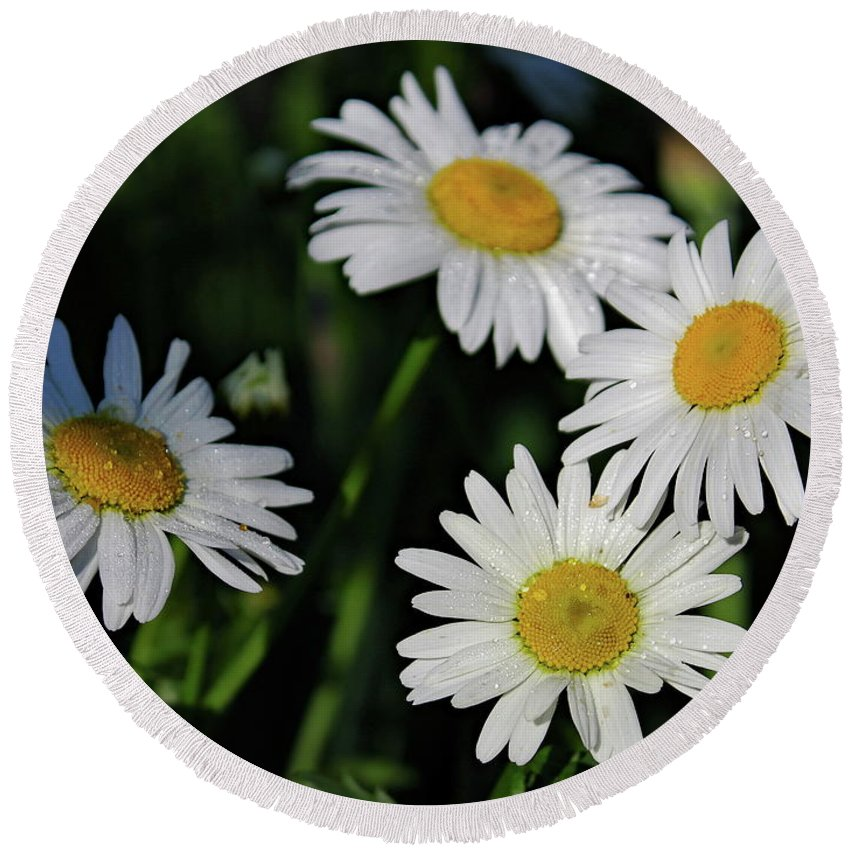 Daisy Flower Round Beach Towel featuring the photograph Garden Daisies by Daniel Saviers