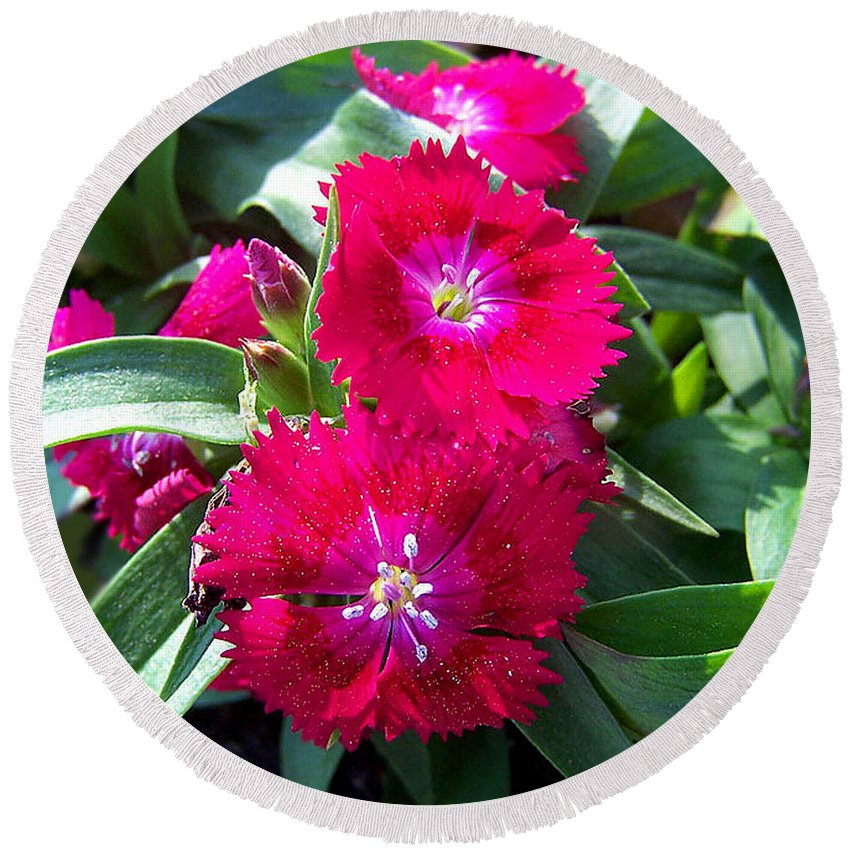 Dianthus Round Beach Towel featuring the photograph Garden Delight by Sandi OReilly
