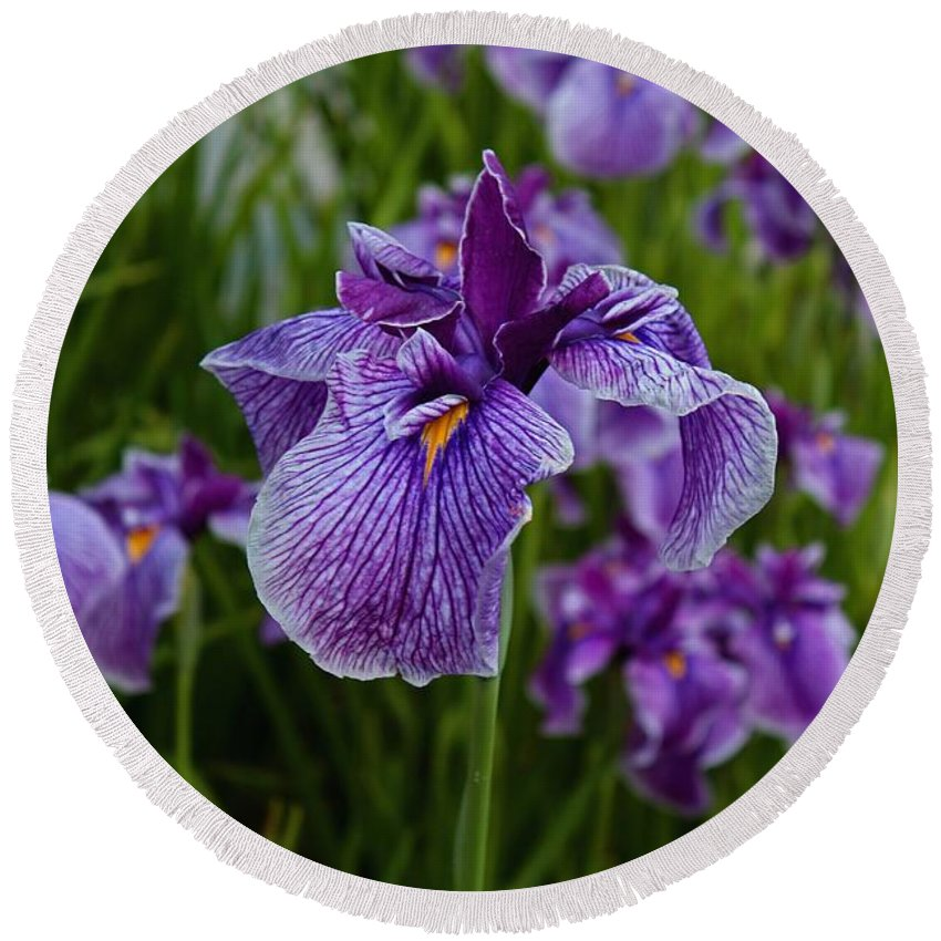 Iris Round Beach Towel featuring the photograph Garden Party by Michiale Schneider