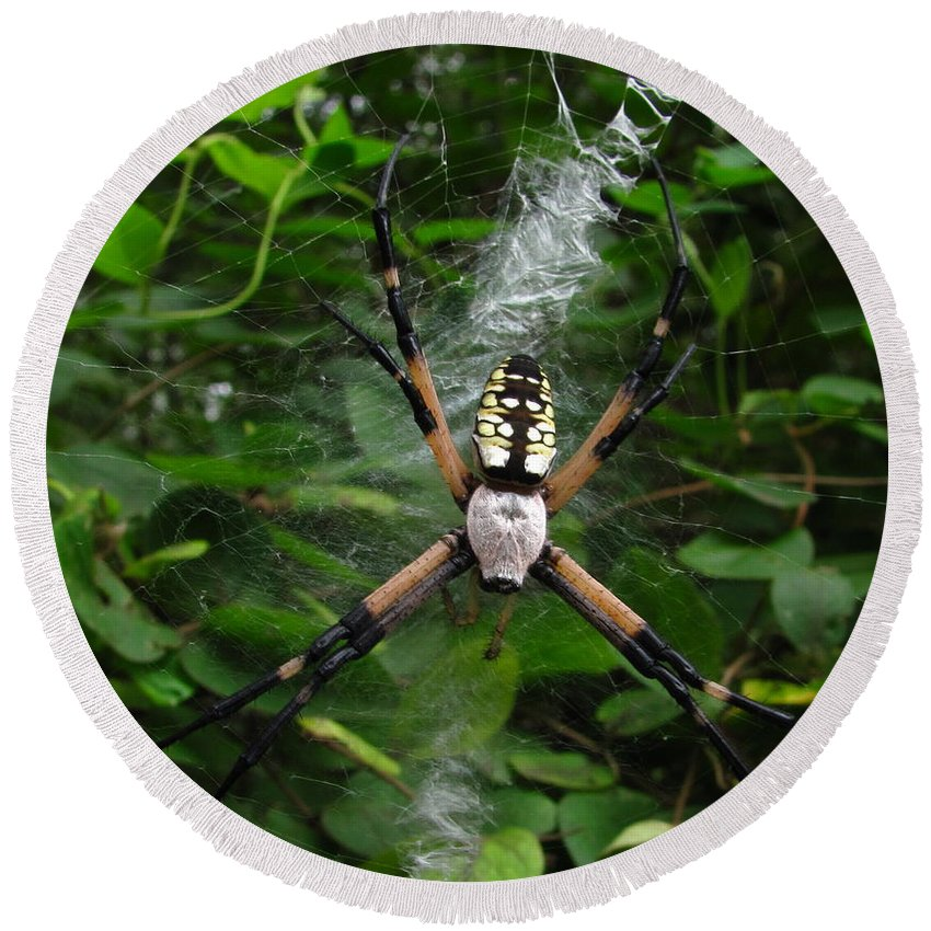 Black And Yellow Garden Spider Images Garden Spider Prints Arachnid Images Forest Ecology Biodiversity Nature Entomology Food Web Maryland Spider Images Maryland Spider Prints Round Beach Towel featuring the photograph Garden Spider by Joshua Bales