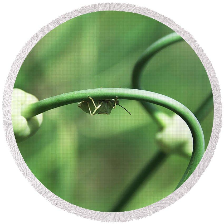 3d; Abstract; Artistic; Botanic; Botanical; Bud; Bug; Digital; Garlic; Garden; Grass; Green; Grow; Growing; Leaf; Leaves; Light; Natural; Nature; Swirl; Swirls; Yellow Round Beach Towel featuring the photograph Garlic Abstract by Svetlana Sewell