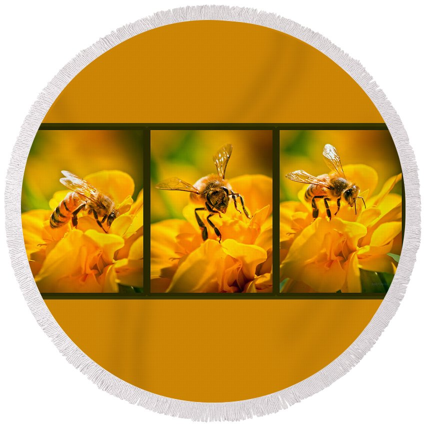 Bees Round Beach Towel featuring the photograph Gathering Pollen Triptych by Bob Orsillo