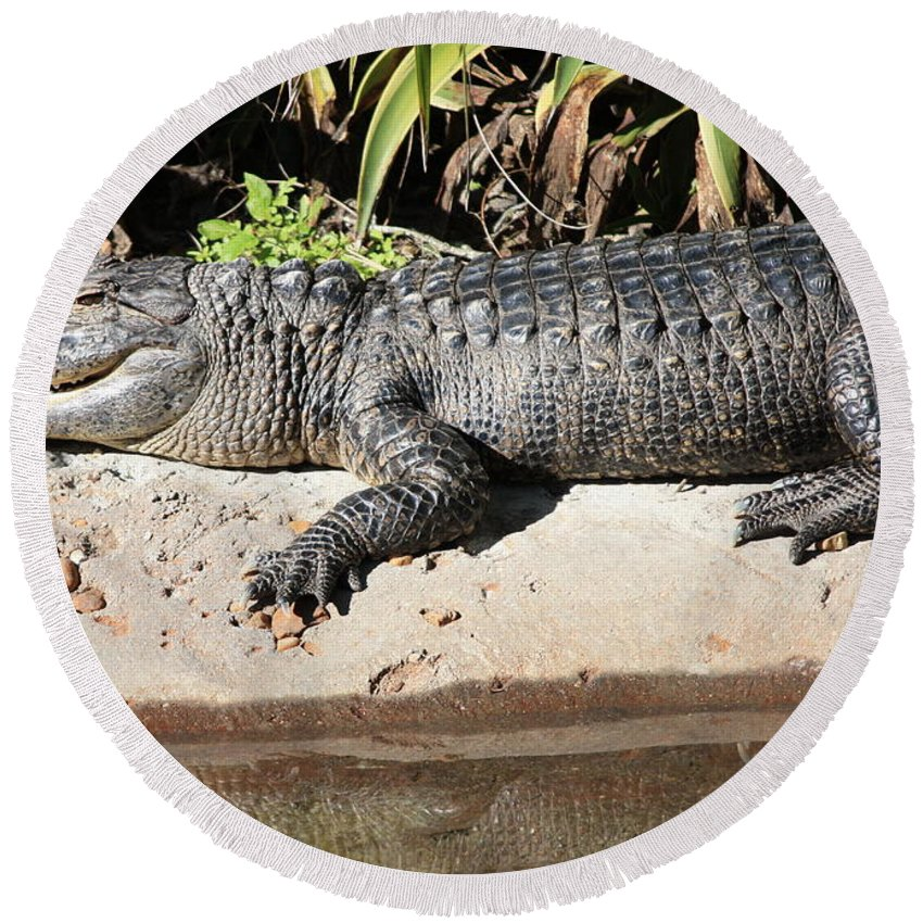 Gator Round Beach Towel featuring the photograph Gator by Carol Groenen