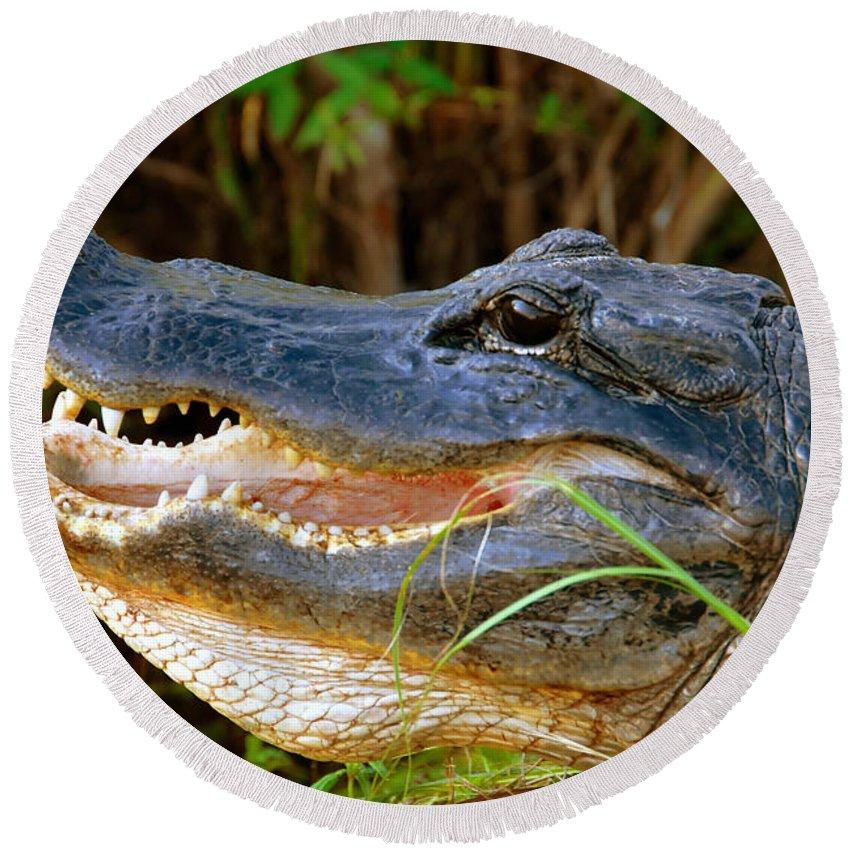 Alligator Round Beach Towel featuring the photograph Gator Head by David Lee Thompson