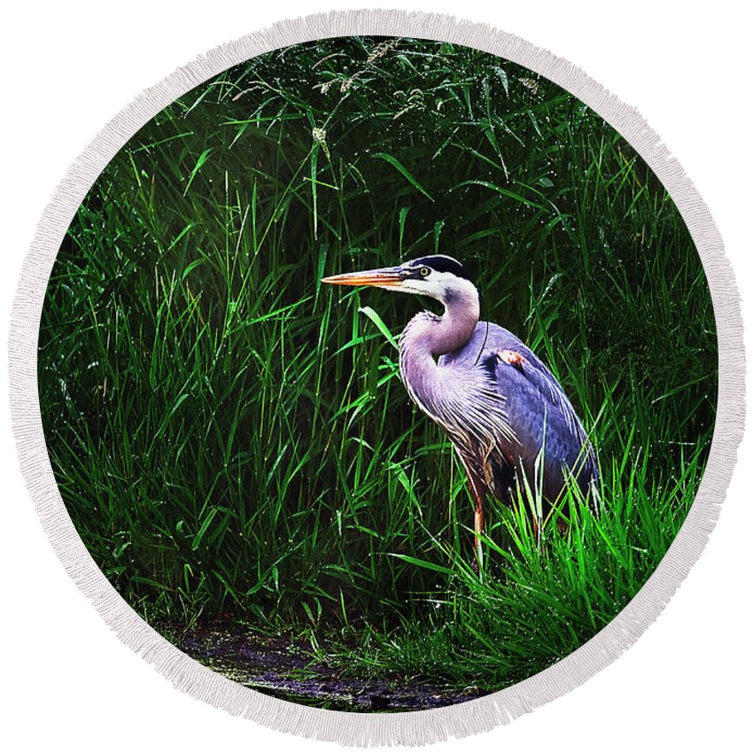 Heron Round Beach Towel featuring the photograph Gbh In The Grass by John Christopher