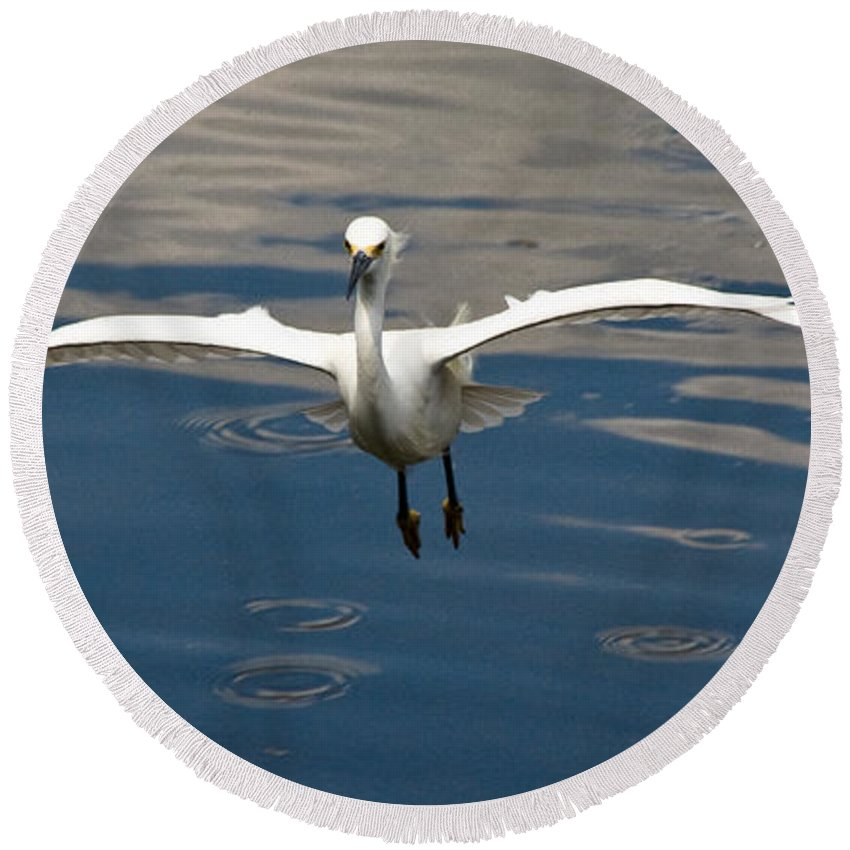 Snowy Egret Round Beach Towel featuring the photograph Gear Down by Christopher Holmes