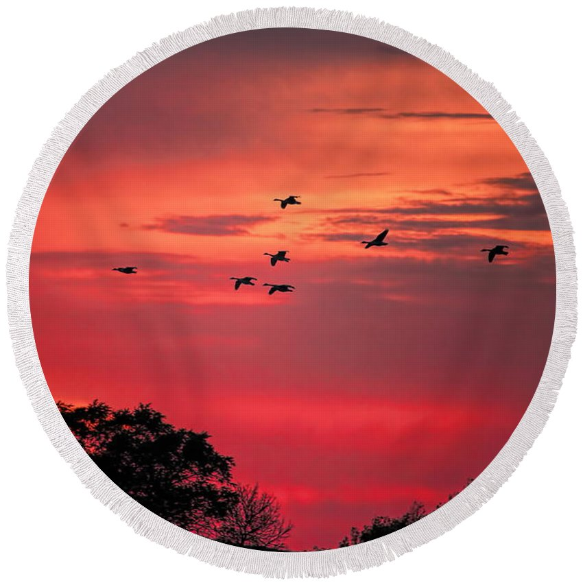 Dale Kauzlaric Round Beach Towel featuring the photograph Geese On Their Sunset Arrival by Dale Kauzlaric