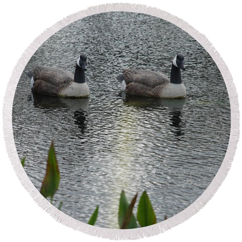 Water Round Beach Towel featuring the photograph Geese by Rob Hans