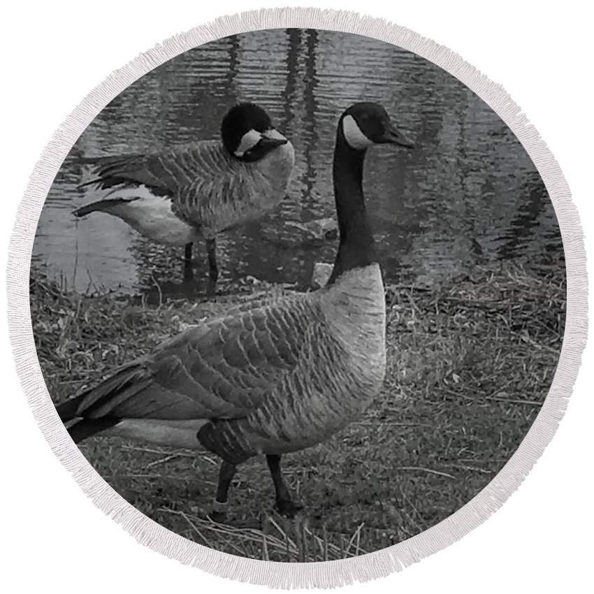 Goose Round Beach Towel featuring the photograph Geese Together by Luther Fine Art