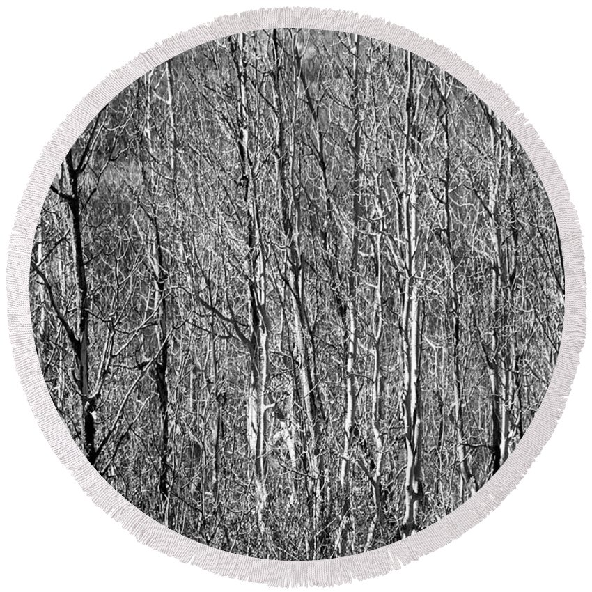 Trees Round Beach Towel featuring the photograph Gehiegi by Frank Henley