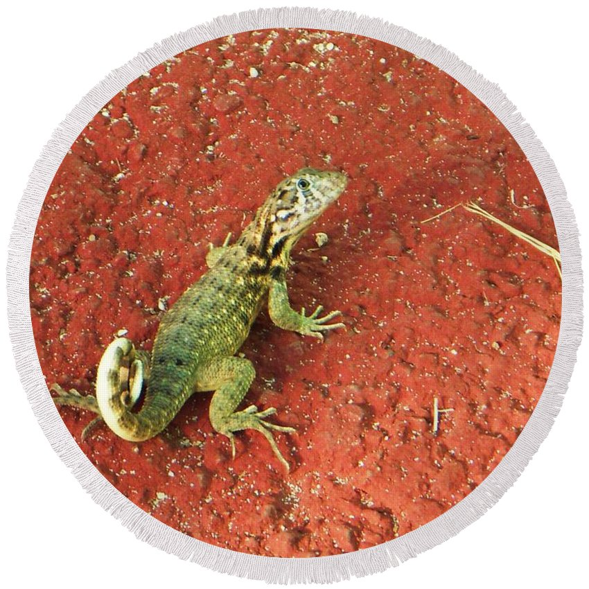 Lizard Round Beach Towel featuring the photograph Geico by Vesna Antic