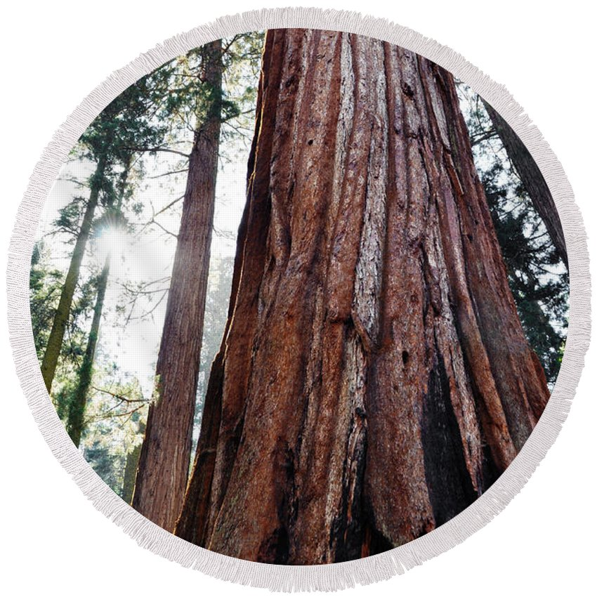 Sequoia National Park Round Beach Towel featuring the photograph General Grant Grove Streaming Light by Kyle Hanson
