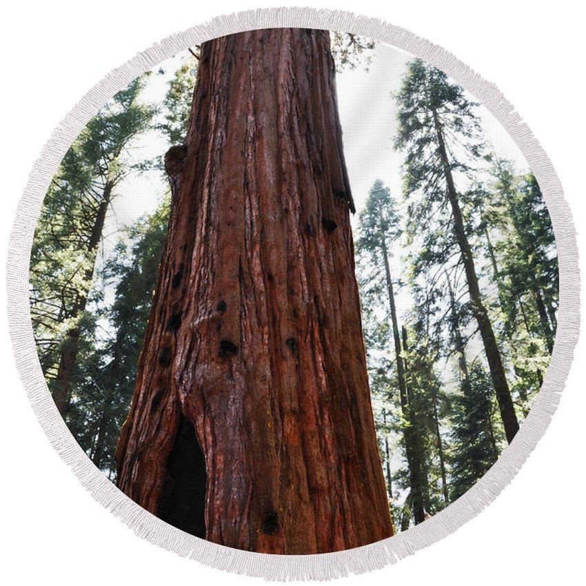 General Sherman Tree Round Beach Towel featuring the photograph General Sherman Tree Portrait by Kyle Hanson