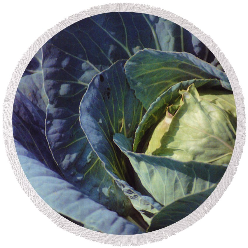 Still Life Round Beach Towel featuring the photograph Georgia Cabbage by Jan Amiss Photography