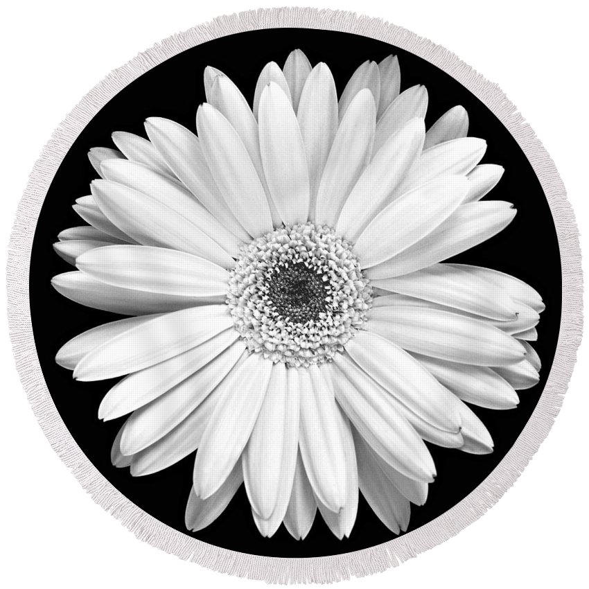 Gerber Round Beach Towel featuring the photograph Single Gerbera Daisy by Marilyn Hunt