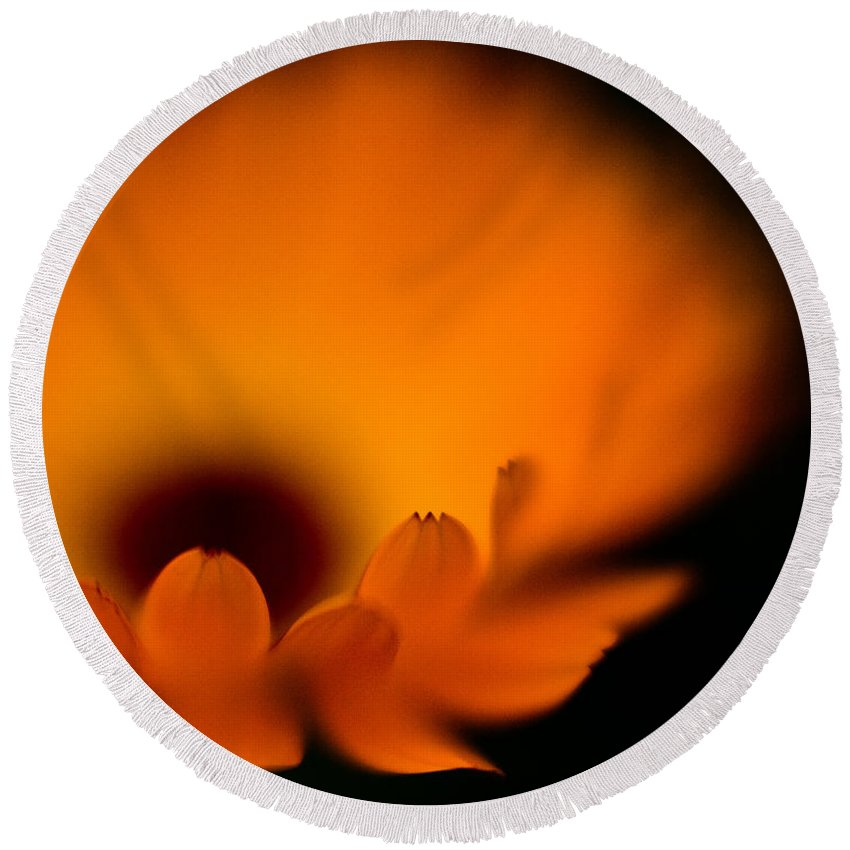 Flower Round Beach Towel featuring the photograph Gerbera Fire by Mike Reid