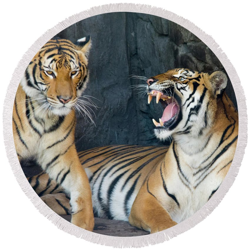 Tiger Round Beach Towel featuring the photograph Get Away by John Black