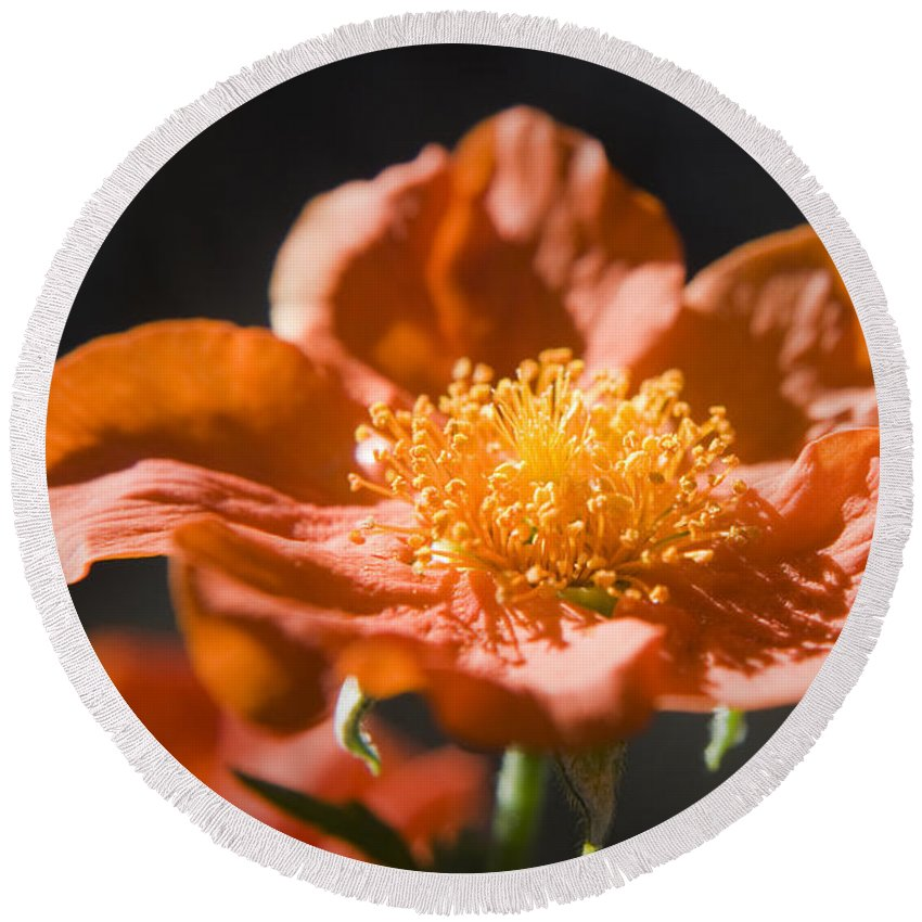 Geum Round Beach Towel featuring the photograph Geum Scarlet Avens by Teresa Mucha