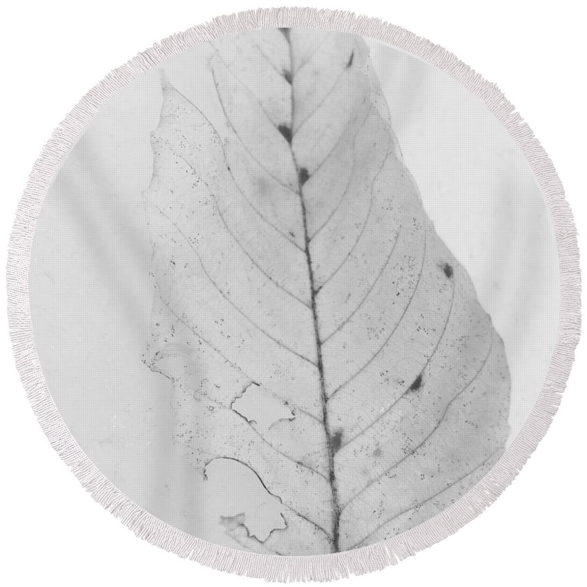 Leaf Round Beach Towel featuring the photograph Ghost Leaf by Modern Art