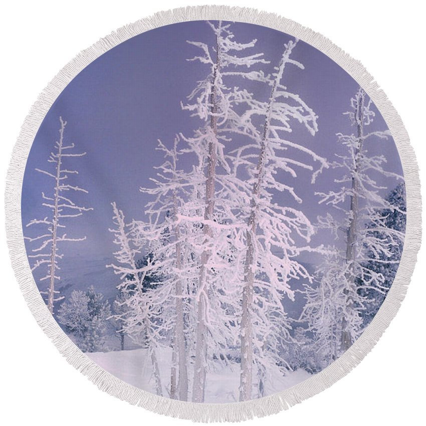 North America Round Beach Towel featuring the photograph Ghost Trees Yellowstone National Park by Dave Welling