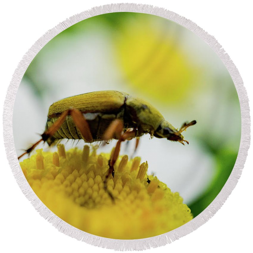 Insect Round Beach Towel featuring the photograph Giant by John Gagnon