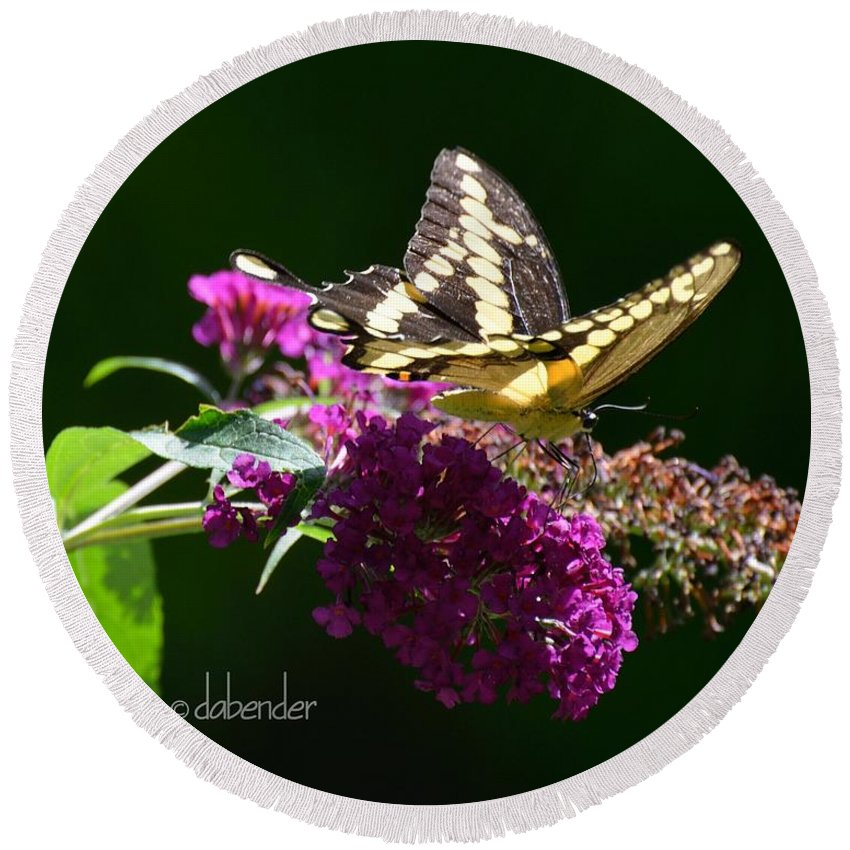 Gardening Round Beach Towel featuring the photograph Giant Swallowtail Butterfly by Debra Bender